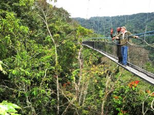 5 days Rwanda gorilla safari Volcanoes national park & Nyungwe canopy walk