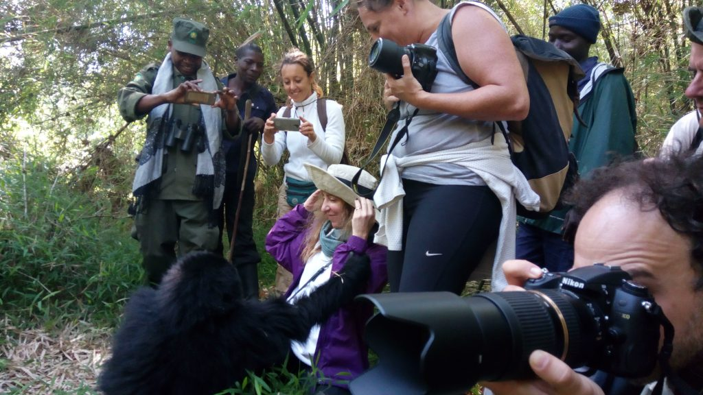 2 days gorilla trekking safari to Volcanoes national park