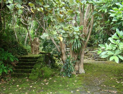 Buhanga Sacred Forest; A True Hidden Secret of Rwanda's Kings