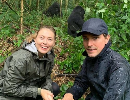 Famous Russian Tennis Player Maria Sharapova Treks Gorillas in Rwanda